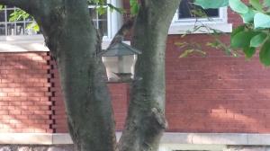 bird in my feeder