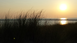 Frankfort dune grass